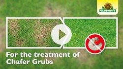 How to apply LawnGrubFree Nematodes