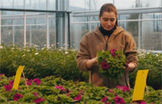 A Neudorff agronomist examines test plants in the product assessment.