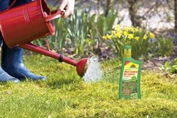 CleanLawn Moss Control for Lawns Concentrate