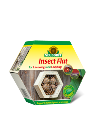 Insect Flat for Lacewings and Ladybugs