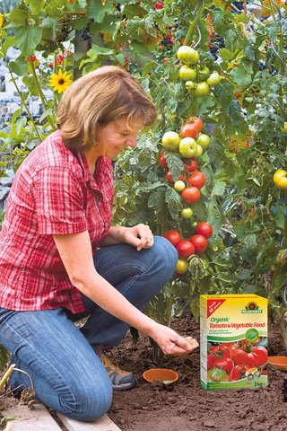 For tasty, full flavoured tomatoes we recommend you use solid fertiliser...