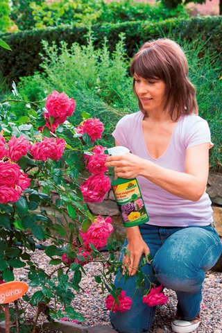 Rose Vitaliser promotes optimal nutrition of roses. And healthy plants are less susceptible to fungal diseases.