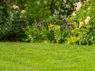 Healthy, moss and weed free lawns – without scarifying!