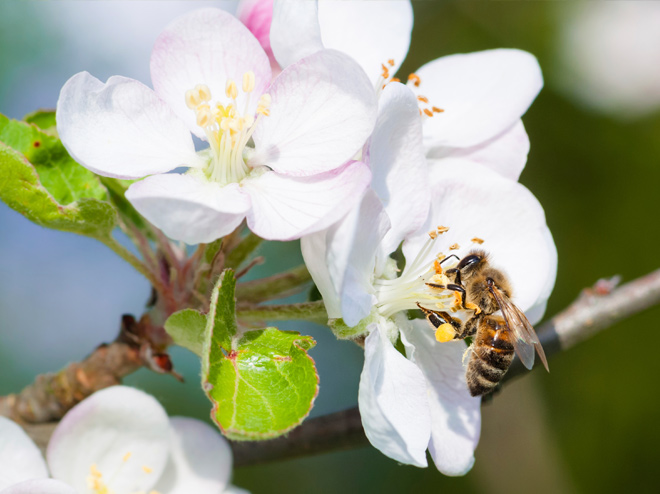 Protecting plants – save bees!