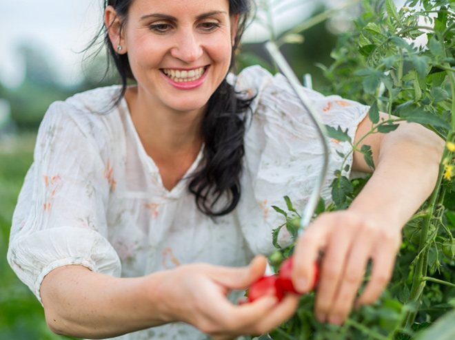 6 steps to growing your own tomatoes