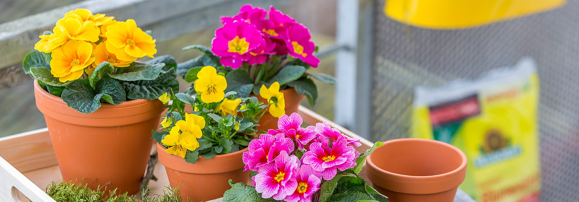 Bring colour to your patio and balcony!